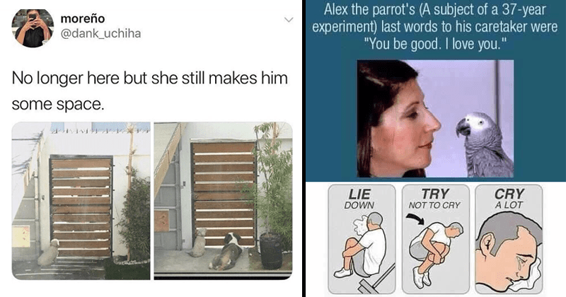Sad memes, sad comics, grief, death, depression, crying | moreño @dank_uchiha No longer here but she still makes him some space | Interesting Fact: Alex parrot's subject 37-year experiment) last words his caretaker were be good love TRY LIE DOWN CRY LOT NOT CRY