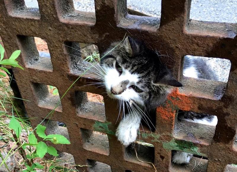 stuck happy ending curiosity Cats rescue - 870149