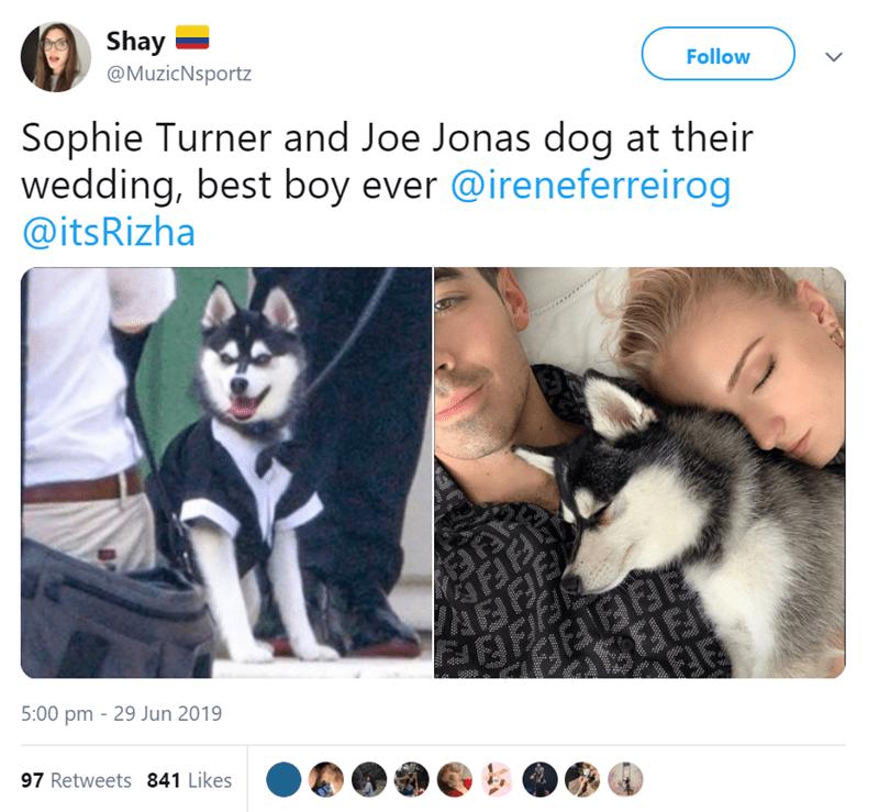 dog with joe jonas and Sophie Turner