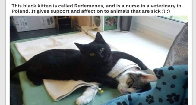 working cats that are both funny and cute