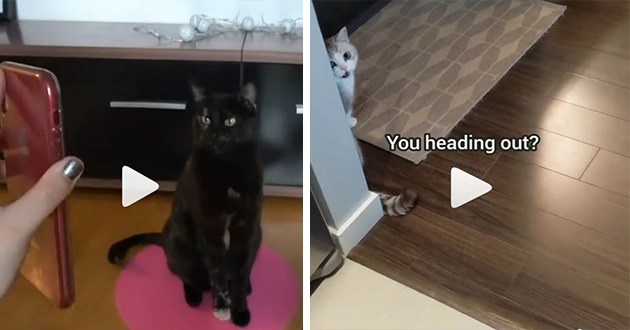 Top cat videos from Instagram