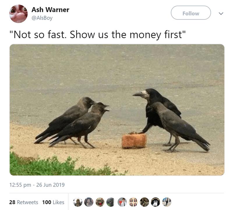 4 birds meeting