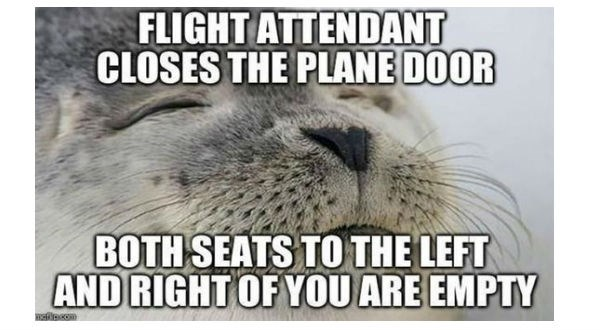 animal memes on vacation
