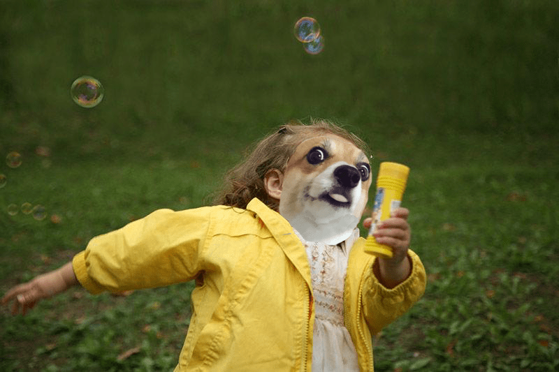 dogs,list,Memes,photoshop battle