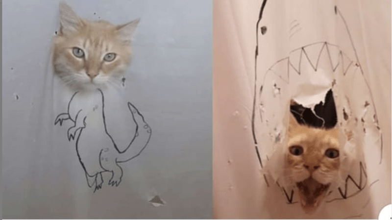 cat tearing shower curtain