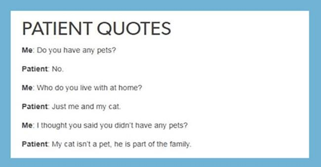 funny posts about cats