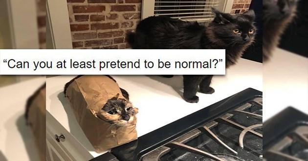 funny cats logic strange
