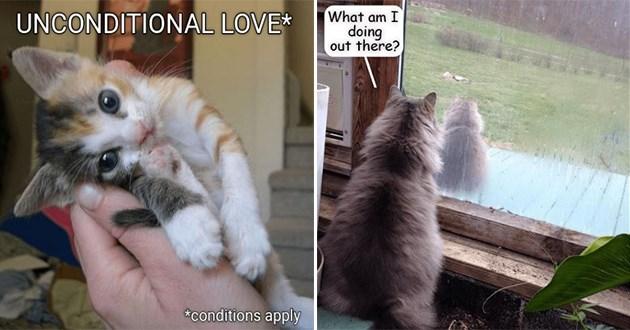 top funny cat memes lolcats