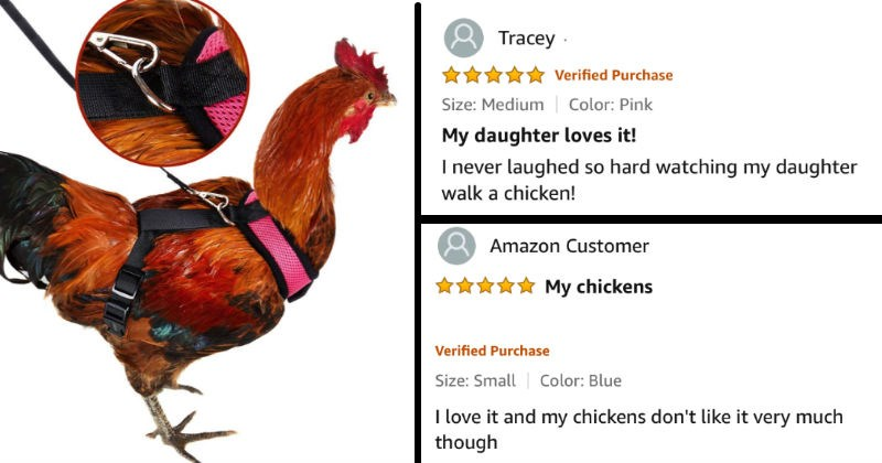 chicken harness review on Amazon for people who want to walk their chickens