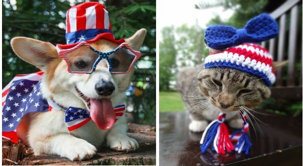 Cat and dog on 4th of July