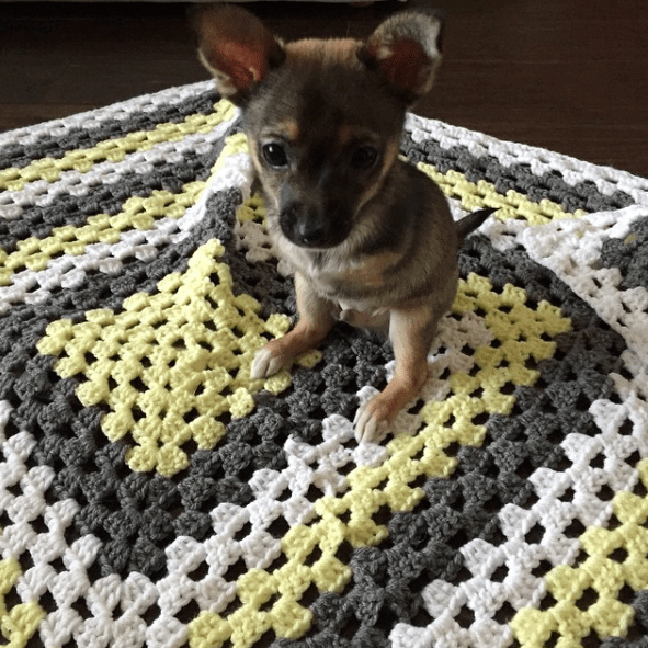 dogs puppies cute chihuahua two-legged jack - 873989