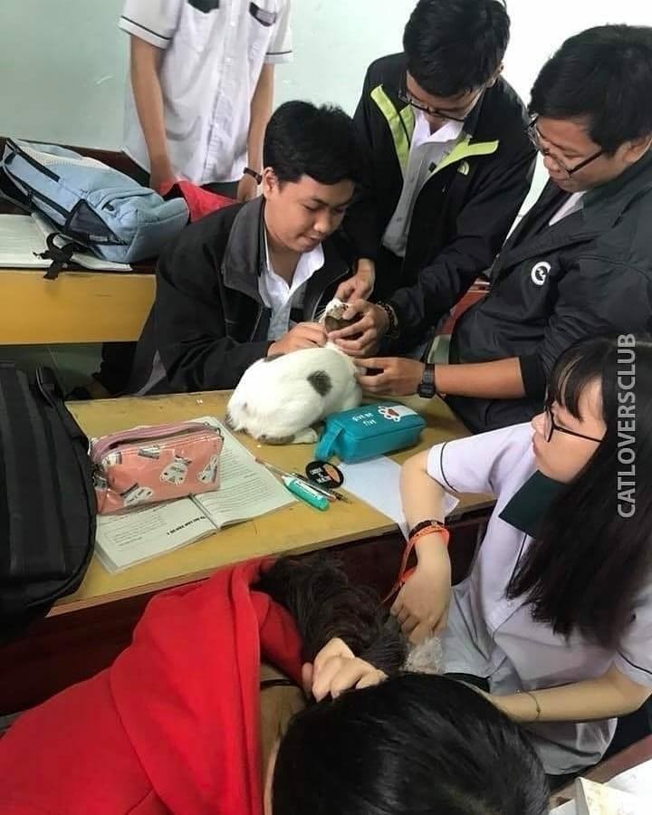 classroom cats aww cute