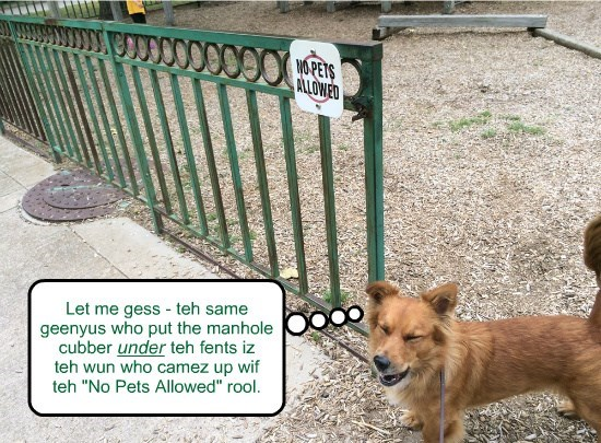 "Let me gess - teh same geenyus who put the manhole cubber teh fents iz teh wun who camez up wif teh ""No Pets Allowed"" rool. under"
