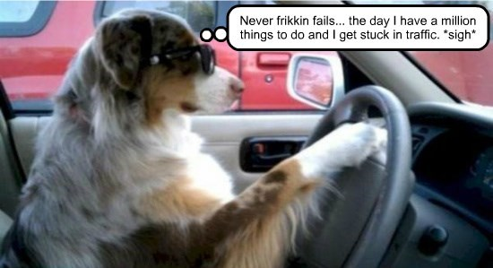 things FAILS dogs million stuck never traffic - 8742203904