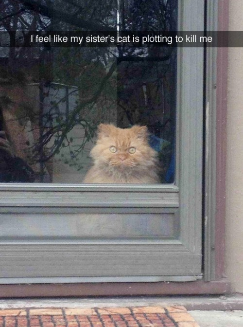 funny animal image of cat giving death stare