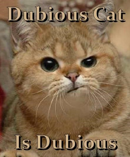Dubious Cat  Is Dubious