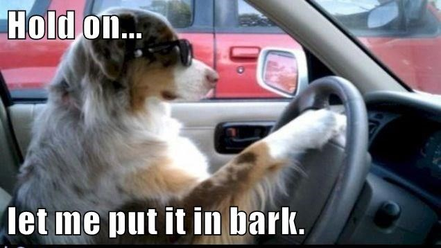 animals in dogs car put bark caption