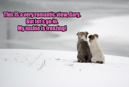 dogs view romantic freezing very tushie caption