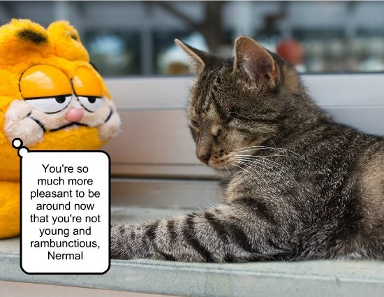 caption,garfield,more,not,Nermal,rambunctious,pleasant,young