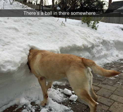 funny animal image of dog with head buried in snow