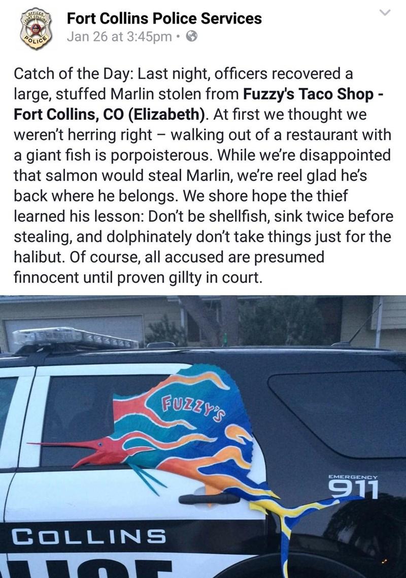 funny halibut pun