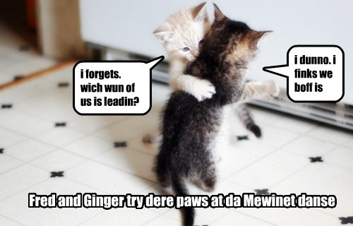 Fred and Ginger try dere paws at da Mewinet danse i forgets. wich wun of us is leadin? i dunno. i finks we boff is