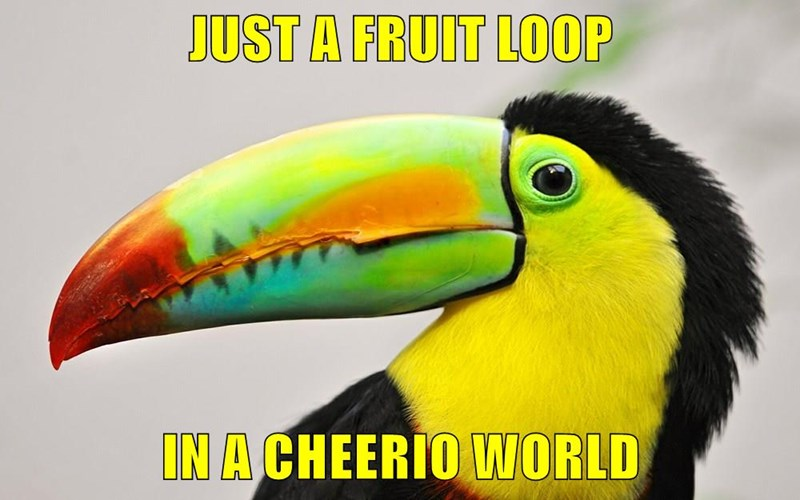 JUST A FRUIT LOOP  IN A CHEERIO WORLD