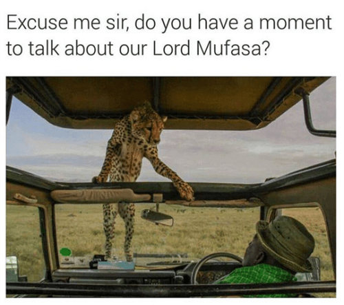 funny animal image of cheetah