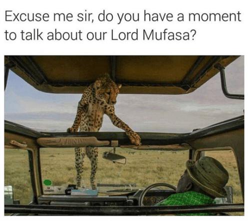 funny animal image of cheetah