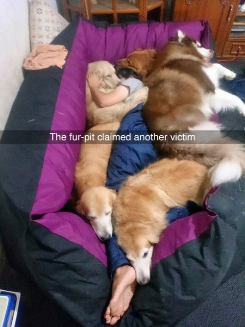 cute animal image of dogs and owner cuddling