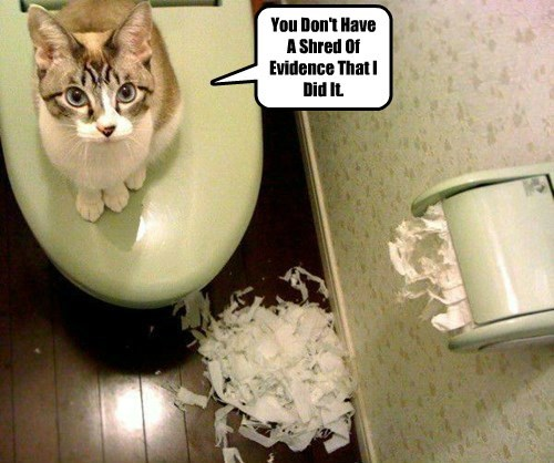 cat evidence have shred dont caption - 8746080000
