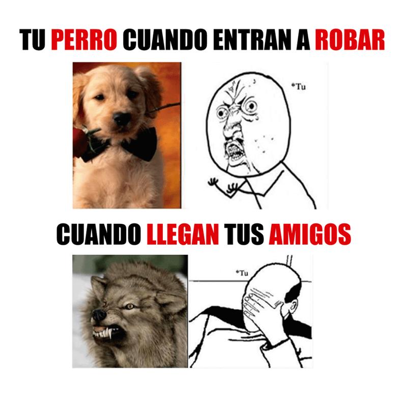 tu perro