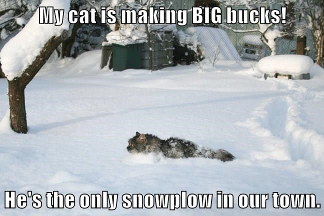 My cat is making BIG bucks! He's the only snowplow in our town.