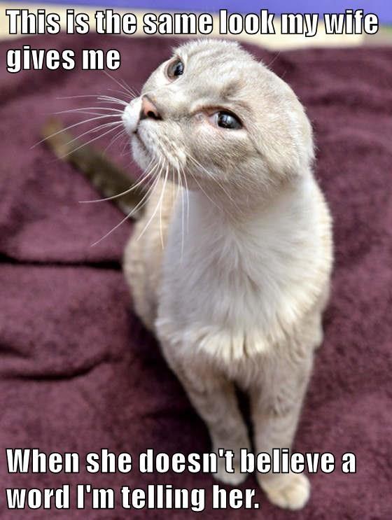 animals Business Cat - 8746166016