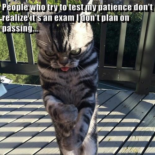 animals cat people patience test dont realize - 8746180096