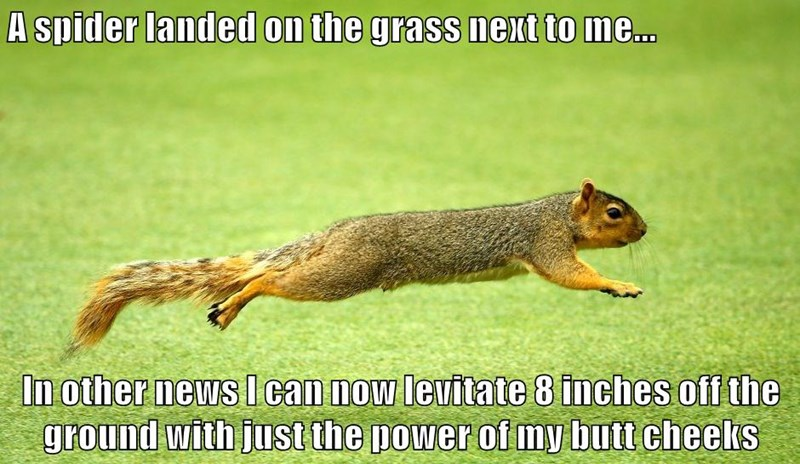 A spider landed on the grass next to me...  In other news I can now levitate 8 inches off the ground with just the power of my butt cheeks