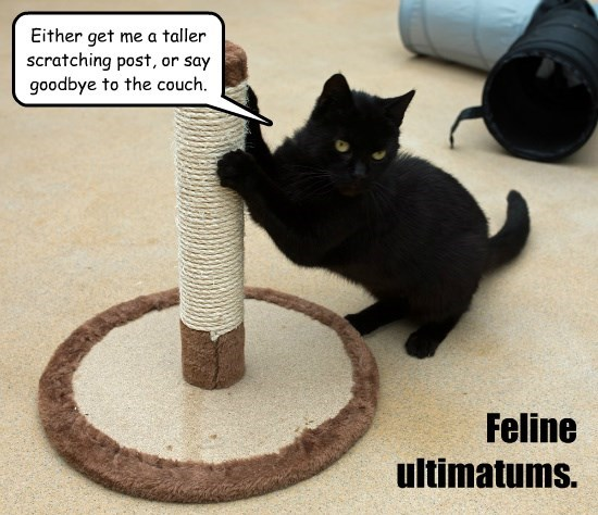 Feline ultimatums.