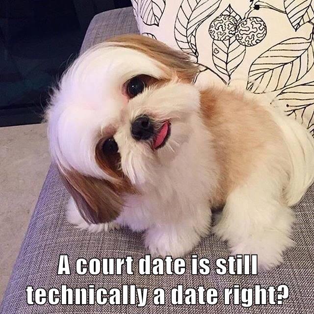 animals date court caption - 8746226944