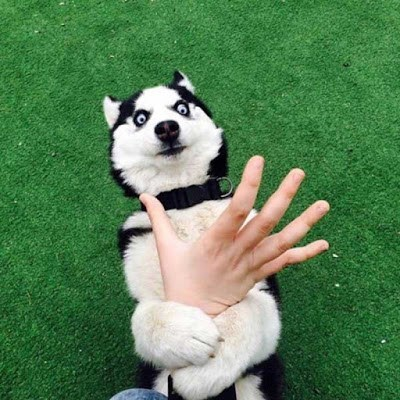 funny animal image of dog