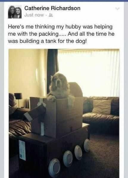 funny animal image of dog in cardboard tank