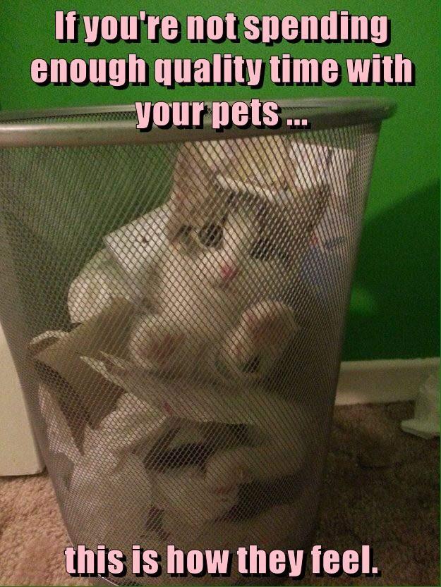 animals cat kitten - 8746446592