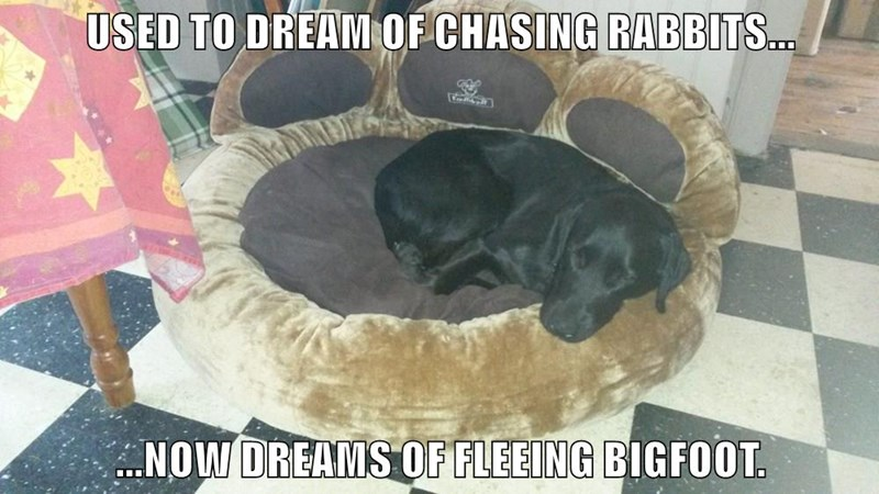 USED TO DREAM OF CHASING RABBITS...  ...NOW DREAMS OF FLEEING BIGFOOT.