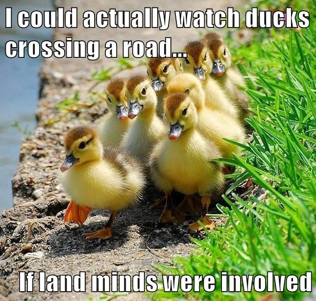 I could actually watch ducks crossing a road...  If land minds were involved