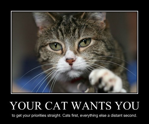 YOUR CAT WANTS YOU