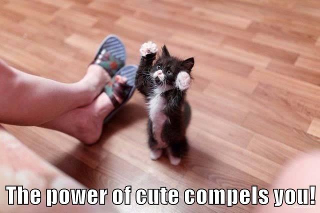 animals cat cute - 8746644224