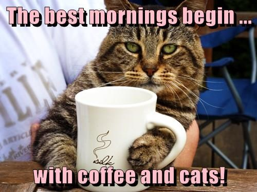 The best mornings begin ...  with coffee and cats!