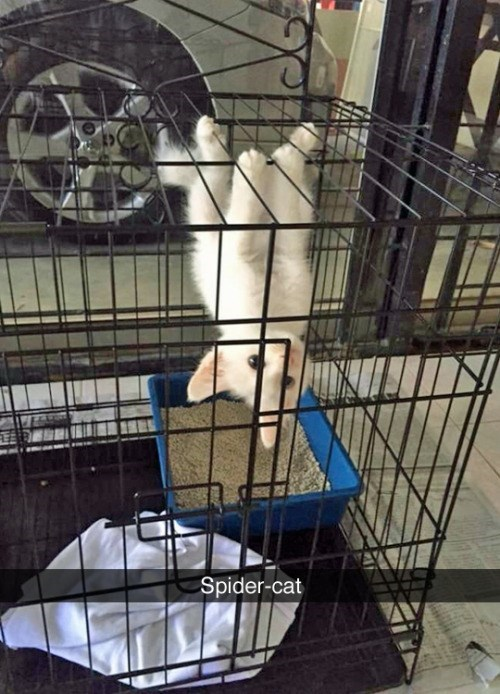 funny animal image of kitten hanging upside down