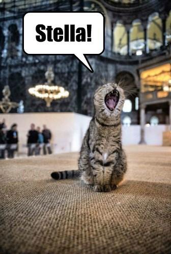 cat caption - 8746815744