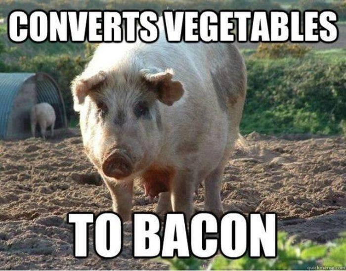 pig food bacon - 8746823168