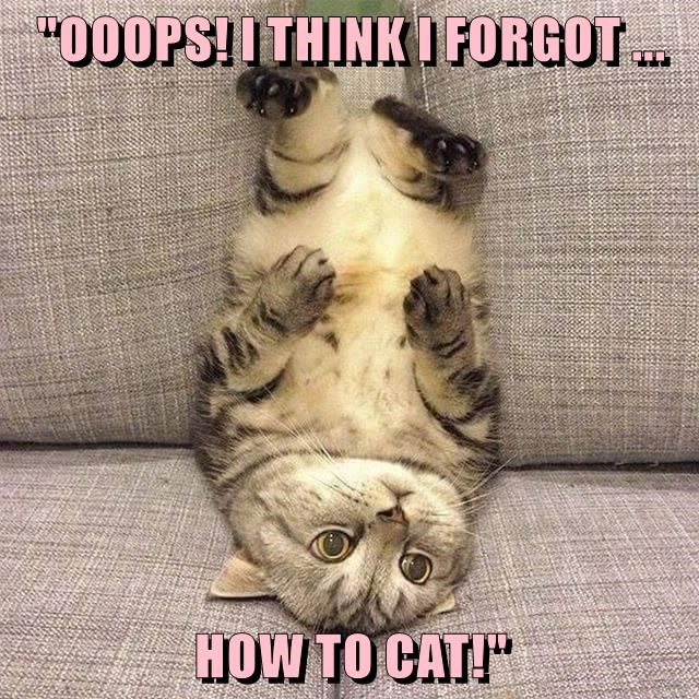 """OOOPS! I THINK I FORGOT ... HOW TO CAT!"""